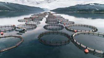 Kiwa og Aquastructures koordinerer sine tjenestetilbud mot oppdrettsnæringen og den tilhørende leverandørindustrien. (Foto: iStock)