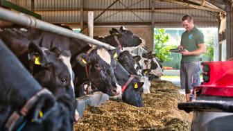 Arla Landwirt Kevin Anhamm vom Niederrhein (NRW) im Stall