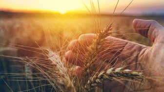 Ludvig & Co, tidigare LRF Konsult, sammanställer årligen prisstatistik gällande åkermark som förmedlats av företagets fastighetsmäklare. 2020 visar prisstatistiken nya toppnivåer för åkermark.