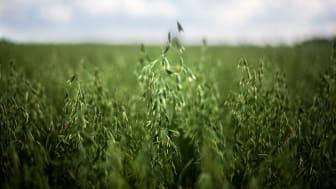 Prisnedgång på åkermark 2018 – men stora lokala variationer
