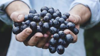 Att handla sitt vin online är både lätt, säkert och fördelarna är många.