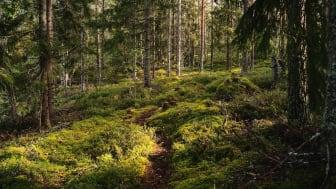 EU.s taxonomi innebär ökad byråkrati för skogsägare och bioenergi. Foto: Pixabay