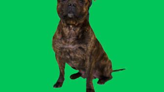 Suurten brändien lähettiläinä lemmikit ovat vielä harvinaisia. Sprite-yhteistyön myötä Arnoldista tuleekin todennäköisesti Suomen kuuluisin koira.