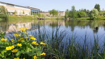 Campusdammen vid Umeå universitet