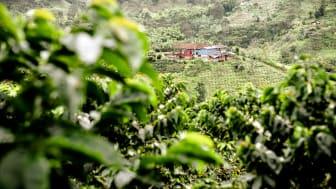 I Colombia har 61 kaffebønder jobbet tett med Nespresso for å skape den nøyaktige kvaliteten Nespresso var på jakt etter for å bringe deg denne kaffen.
