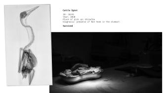 Sony World Photography Awards 2021, Student © Irene Facoetti (Cfp Bauer, Italy) (2).jpg
