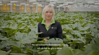 Trädgårdsmästare Maria Lundgren på Arvidssons i Fjärås odlar gröna växter.
