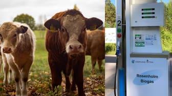Om biogasbil inte är miljöbil borde också djur klassas som ohållbara