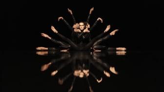 Virpi Pahkinens unika rörelsevokabulär har liknats såväl vid ett smidigt kattdjur som en skorpion med gadden redo att hugga. Foto: José Figueroa
