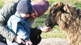 Skånes Djurpark håller öppet 20-28 februari med sportlovsaktiviteter för hela familjen.