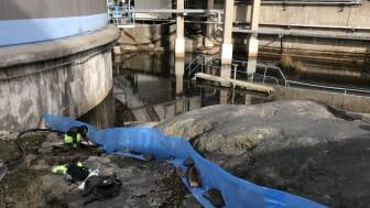 Här pågår räkning av större vattensalamandrar vid dammen i Louddens oljehamn.