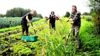 Biodynamischer Hof Rekola, Finnland (Foto: Sektion für Landwirtschaft am Goetheanum)