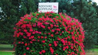 Stort overskud i Rødovre Kommune