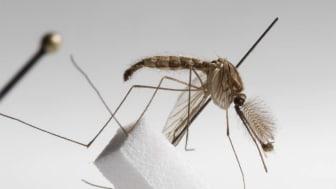 """Utstillingen klima2+ inviterer til klimadiskusjoner via tre gjenstander, malariamygg, """"super""""datamaskin og industrivev. Foto: Håkon Bergseth, Norsk Teknisk Museum."""