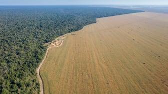Danish Crown har gennem sine svineproducenters forbrug af soja fra Sydamerika et ansvar for afskovning af tropiske skove.