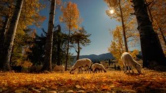© Veliko Karachiviev, Bulgaria, Shortlist, Open competition, Travel, 2020 Sony World Photography Awards
