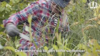 Trädgårdsveckor på Sofiero