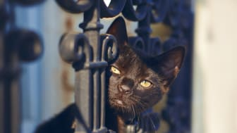 Schwarzen Katzen darf man wohl auch am Freitag, den 13. über den Weg trauen.