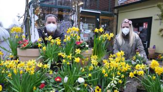 Hier blüht der Frühling bereits: In der Hephata-Gärtnerei gibt es ein reiches Sortiment an Frühlingsblumen. Auf dem Bild Floristin Sandra Schmidt und Stefanie Schrimpf von der Hephata-Gärtnerei.