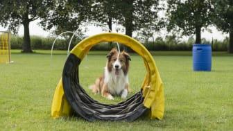 En hund vid en hoopersbana