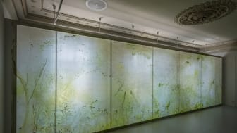 Alma Heikkilä these processes include plasticity, mutualistic symbiosis, and extinction 2020