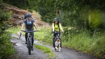 Från sommaren 2021 är det ännu enklare att cykla på S:t Olavsleden. Foto: Göran Strand