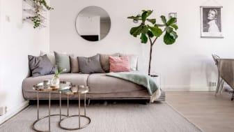 Styla hemmet med växter