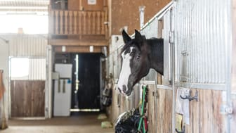 Stallbesiktningen är utformad med fokus på hållbara hästar, miljö och säkerhet. Foto: Fredrik Jonsving