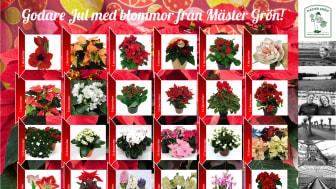 En blomstrande julkalender från den skånska trädgårdsmästaren