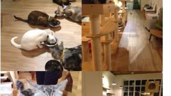 Flooring for Pet Friendly Places