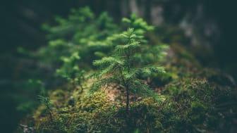 Miljöfarliga verksamheter blir miljövänliga (?) – EU:s klassificeringssystem för miljömässigt hållbara investeringar