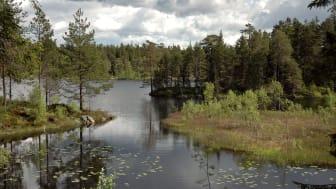 Foto: Örebro kommun/Fredrik Kellén