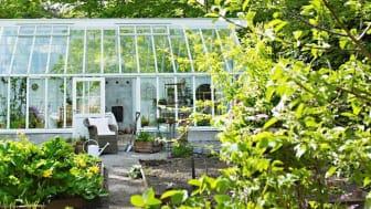 Vårt växthus