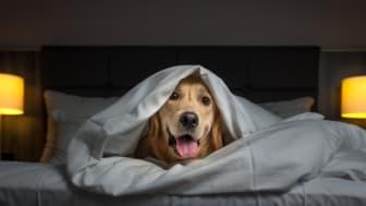 Giv din hund en stressfri start på det nye år.