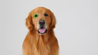 Ny mjukvaruuppdatering version 2.00 för A6400 ger ögon-AF i realtid för djur