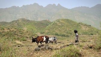 Jordbruket nyckeln till en planet i balans