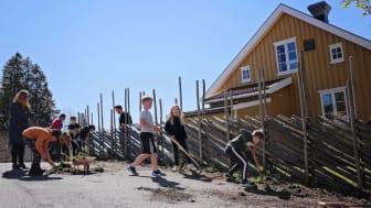 Økologisk Norge får støtte til å etablere flere skolehager på Østlandet. Bildet er fra etableringen av skolehagen på Nordby skole i Ås. (Foto: Eva Birgitta Hollander/Heia Folk).
