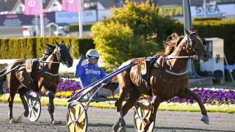 Moni Viking vann Harper Hanovers Lopp 2020 och är i år en av deltagarna i Elitloppet.