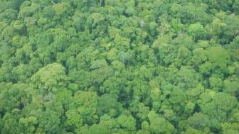 Støtter, der køber regnskovscertifikaterne, er med til at bevare regnskov i El Castillo kommune i Rio San Juan, Nicaragua.
