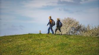 I sommar och höst finns sex tillfällen till guidade mat- och upplevelsevandringar i platåbergslandskapet. Foto: Henrik Theodorsson/Platåbergens Geopark