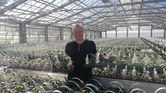 Trädgårdsmästare Henrik Jönsson tipsar om hur du får egen färskpotatis och jordgubbar till midsommar.