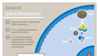 Zelboraf-vaikutusmekanismi
