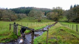 Traditionell provtagning av bottenfauna med håv i en bäck omgiven av walesisk betesmark. Foto: Mathew Seymour