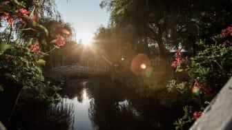 Tivoli Friheden åbner Danmarks største Blomsterfestival