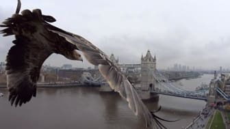 An Endangered Eagle's Perspective of London