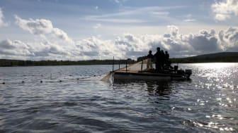 Bild från 2018 års reduktionsfiske i Svartbyträsket.