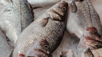 Smart teknik ska minska miljöpåverkan från landbaserade fiskodlingar
