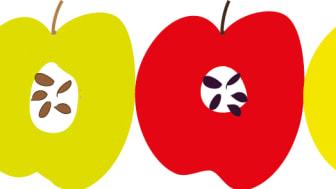 Äppelfestival 6 september vid Naturens hus, Örebro