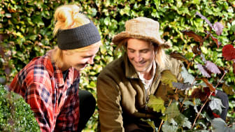 Hösten är bästa tiden att plantera. Dags för Stora Planteringsveckan 5-13 september. Foto: Sofia Ernerot