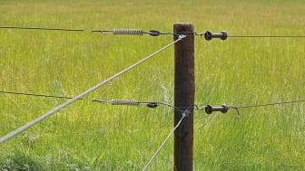 Rovdjursavvisande stängsel är en vetenskapligt belagd effektiv metod för att skydda tamdjur. Bild från Gallagher Europe.